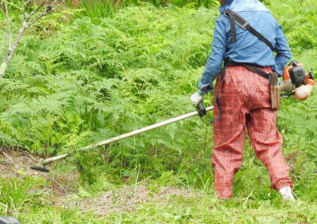 上田市で草刈りにかかる料金相場は?追加料金や業者選びのコツまで解説